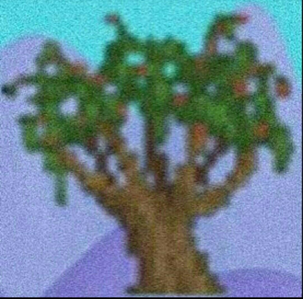34 pepper tree